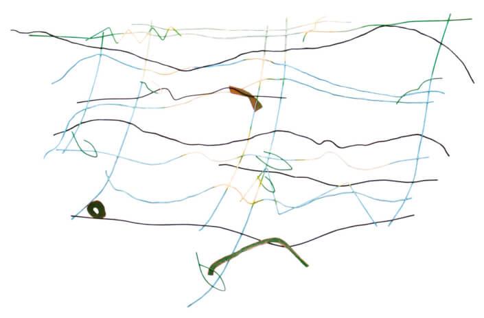 Ryby a ptáci, 2008